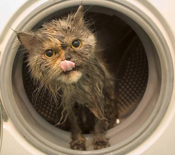Dryer Cat is not amused.